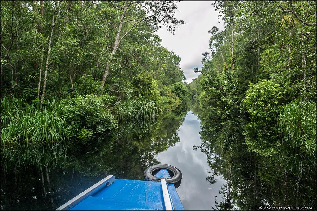 Tanjung Puting borneo