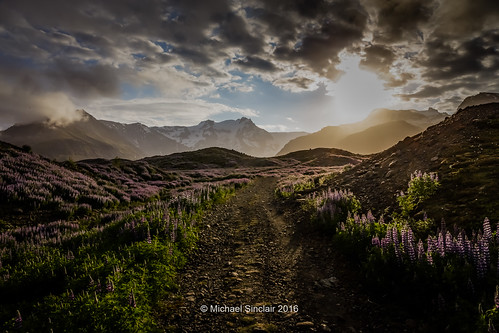 sunrise is iceland earlymorning east lupins skaftafell hvannadalshnukur earlylight canon6d iceland2016