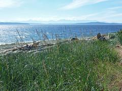 Summer Day On Puget Sound