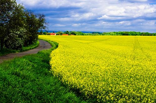 blue sky cloud green field grass yellow landscape nikon day prague cloudy path rape rapeseed outfield řepka d7000 ctěnice mygearandme mygearandmepremium