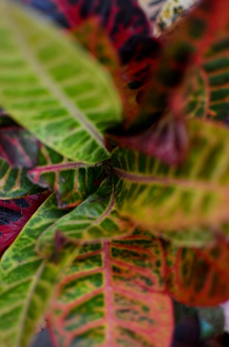 Phipps Conservatory - Leaves