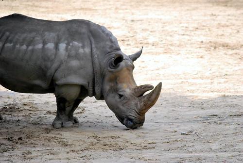 MZ - rhino-001