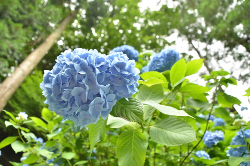 20130615_鎌倉