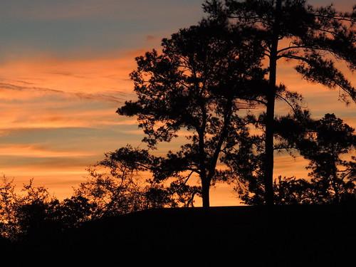 sunset sky usa clouds texas silhouettes pinetrees easttexas diamondclassphotographer flickrdiamond texasscenes sunrisesunsetsong