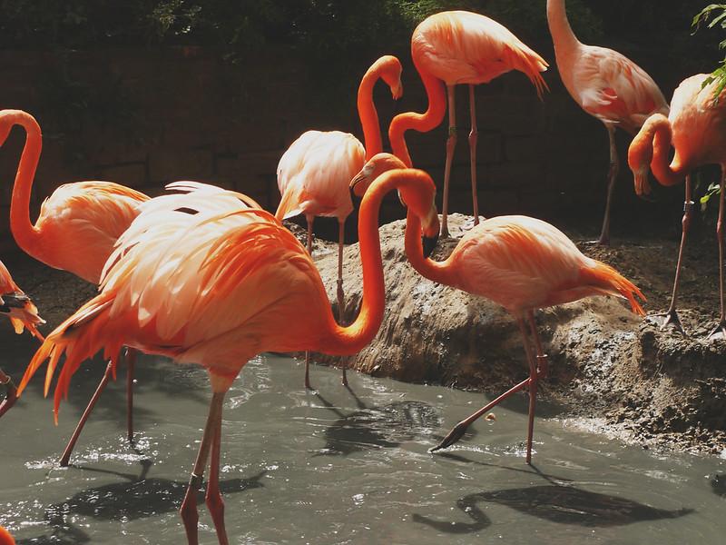 Flamingohals