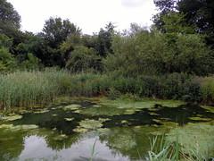 GOC Hitchin 007: Purwell Ninesprings Nature Reserve, Hitchin