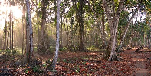 trees panorama naturaleza nature forest landscape countryside costarica scenery natur paisaje scene caribbean paysage landschaft wald bäume región bestcapturesaoi karbik stega60