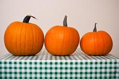 Allotment pumpkins
