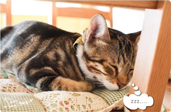 貓門-13