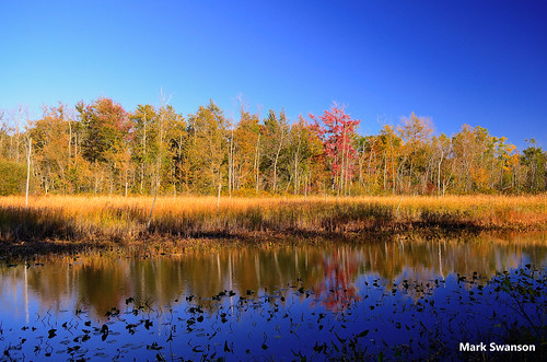 travel trees sunset sky lake west color fall nature grass leaves pine landscape woods nikon exposure michigan lakemichigan polarizer circular d5100