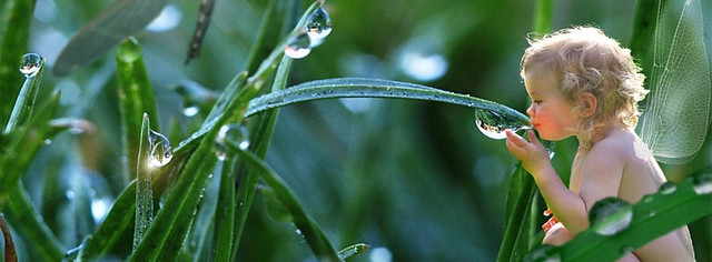 Dew Drops Facebook Cover Photo
