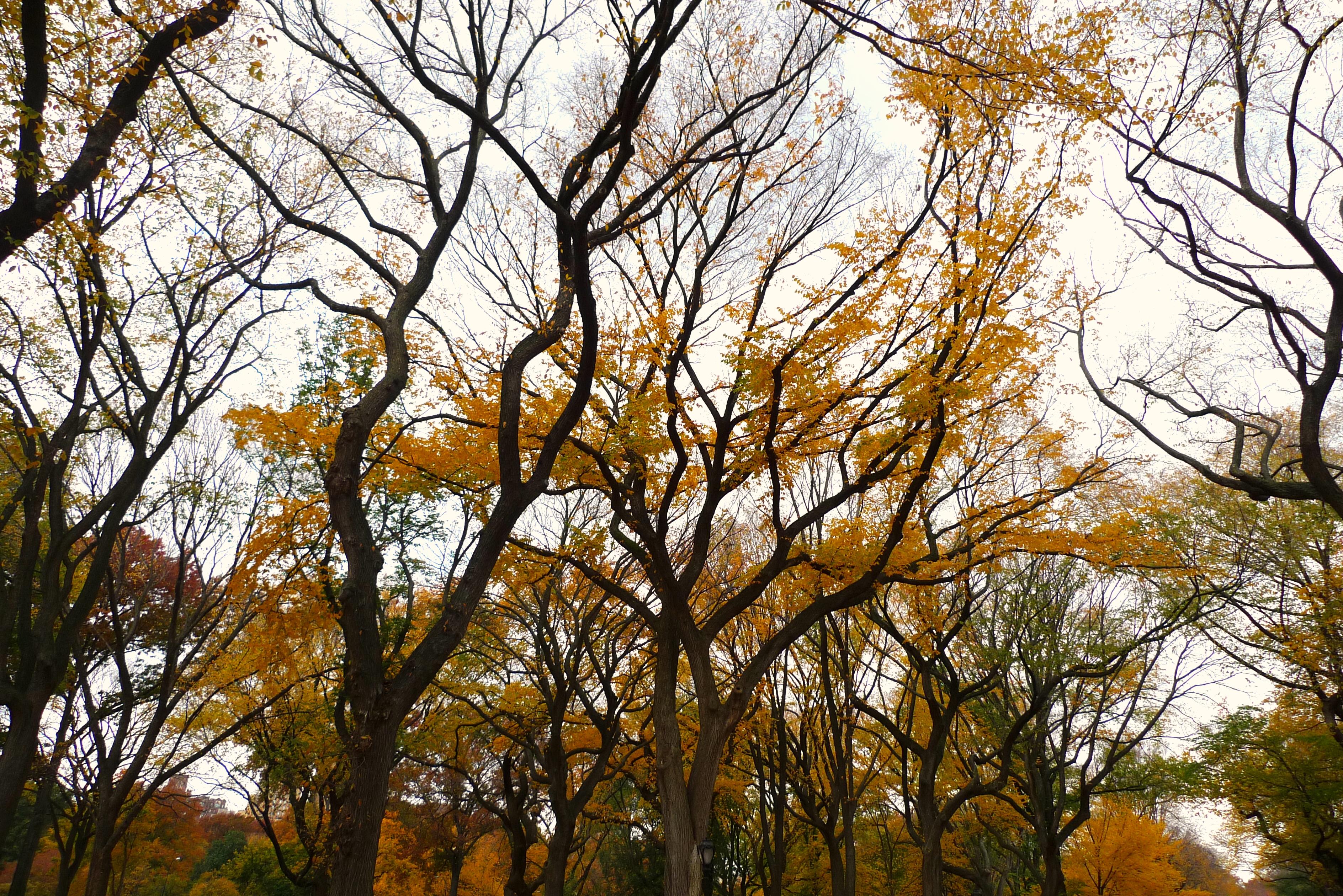 central park, 5 november