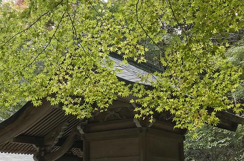 【写真】2013 紅葉 : 日向大神宮/2020-10-05/IMGP3379