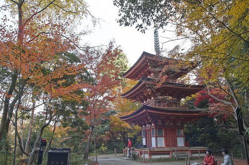【写真】2013 紅葉 : 浄瑠璃寺/2019-08-22/IMGP3546