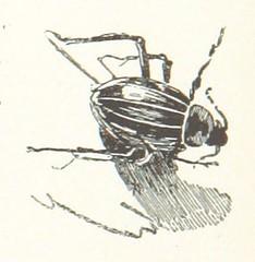 """British Library digitised image from page 237 of """"Nilfahrt. Mit ... Illustrationen ... von R. Mainella"""""""
