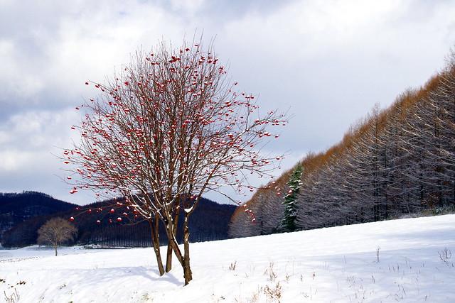 「ナナカマドの木が」あるところ