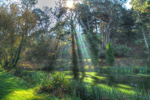 sanfrancisco goldengatepark nature northerncalifornia unitedstates bayarea carlzeiss a57 sonyalpha mygearandme