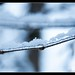 Snow covered twig