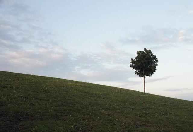 anteketborka.blogspot.com,  arbre 8