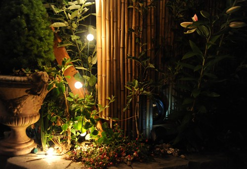 The edge of night, Italian trophy planter, lights, flowers in bloom, the darkness of night, bamboo fence, A Garden for the Buddha, Seattle, Washington, USA by Wonderlane
