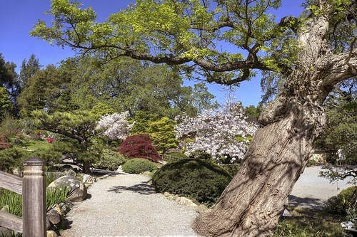 california park japanesegarden spring raw fav50 blossom saratoga bloom sakura hdr hakonegardens 3xp photomatix nex6