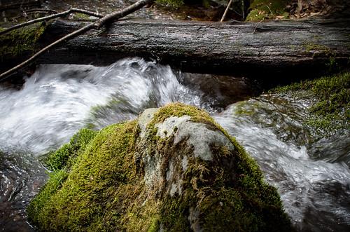 water rock moss blueknobstatepark nikond7000