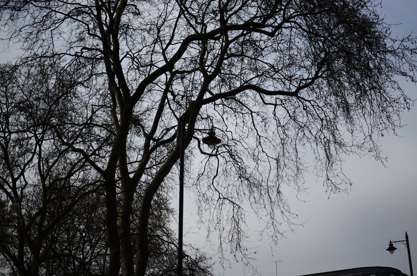 stark london trees