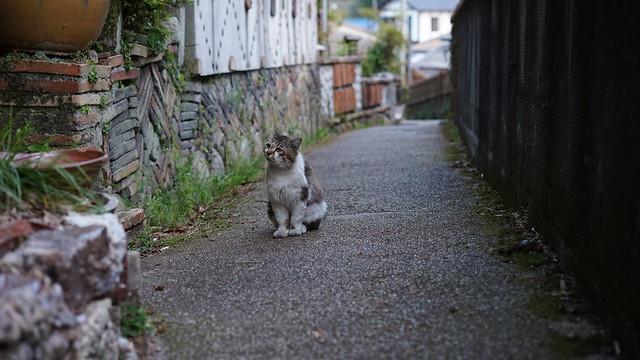 Kamagaki_10