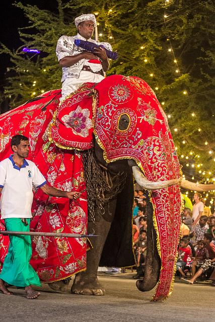 Elephant - Nawam Perahera   Flickr - Photo Sharing!