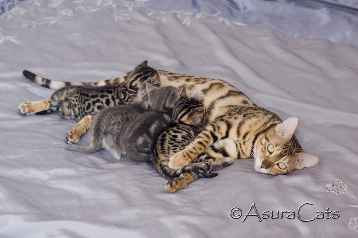 Mirage & kittens