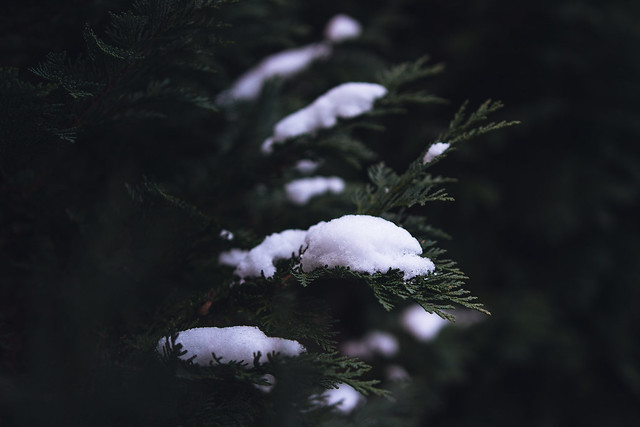 [326] Snow Covered