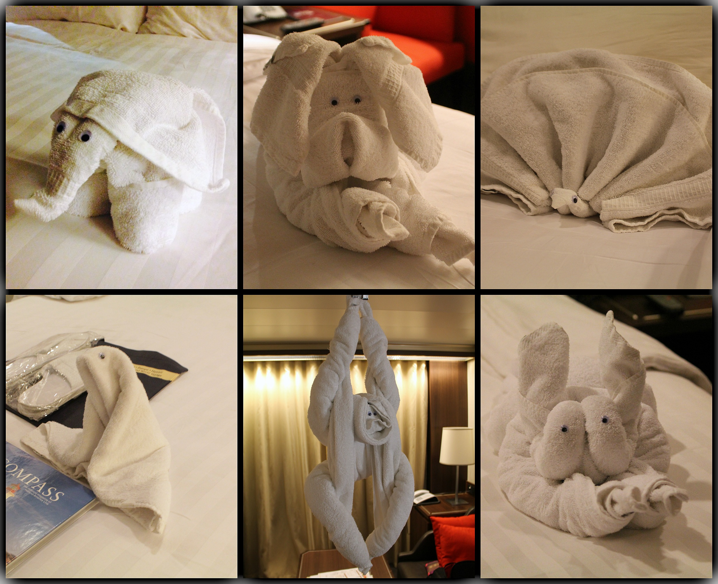 eurodam cabin 6096 holland america towel animals