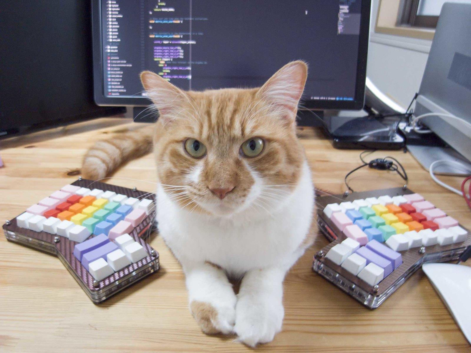 ErgoDox with Cat