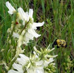 Bumblebee and Ladybug