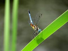 dragonfly landing zone