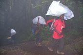 Trekking/Besteigung des Kilimandscharo über die Lemosho-Route. Aufstieg durch den Regenwald. Foto: Günther Härter.
