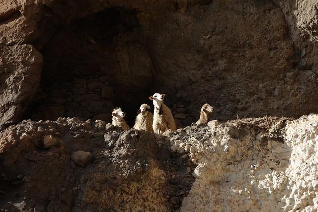 Acusa Seca Caves DSC01586