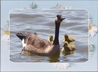 Have a Quacking Great Day!