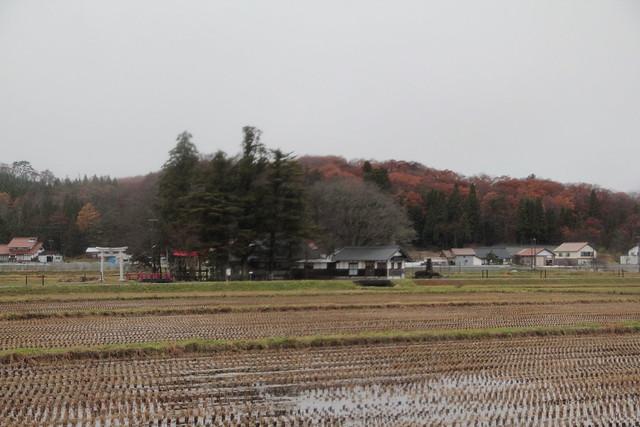 いったん積雪があり,雪がとけた田んぼ.秋と冬が混在する八幡高原の風景.