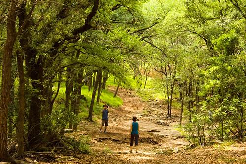 park family trees vacation green sanantonio creek river gold big bed texas canyon trail oil cave alamo cavern newbraunfels riverwalk april30