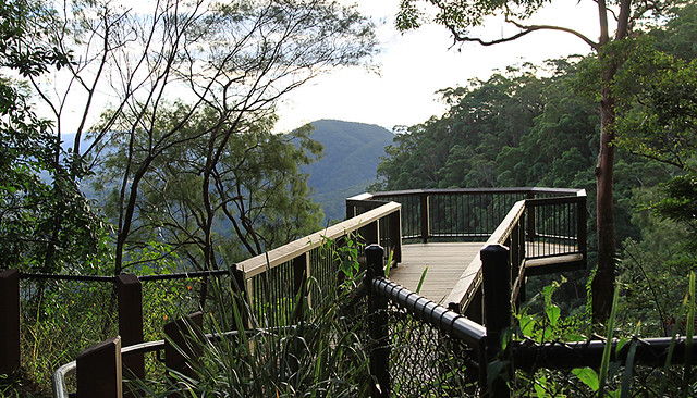 MalenyRainforestLookout