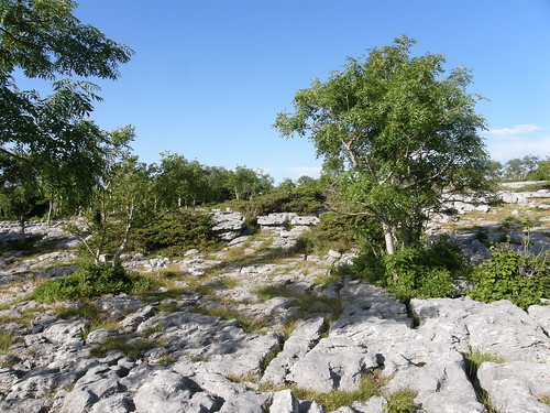 Limestone pavement with trees