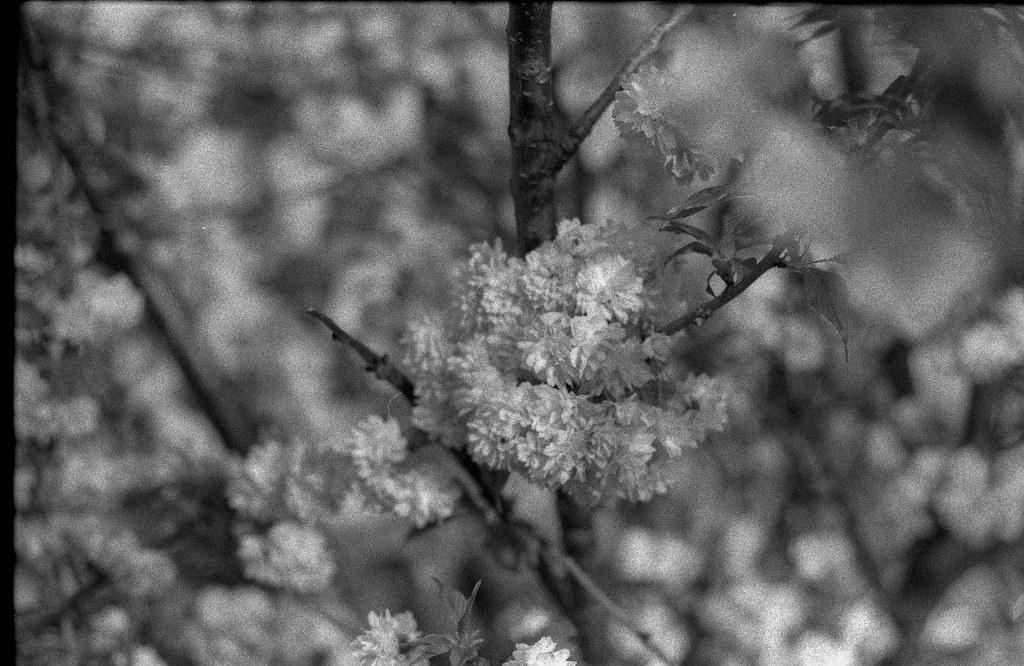 Frühling in Wien-4.jpg