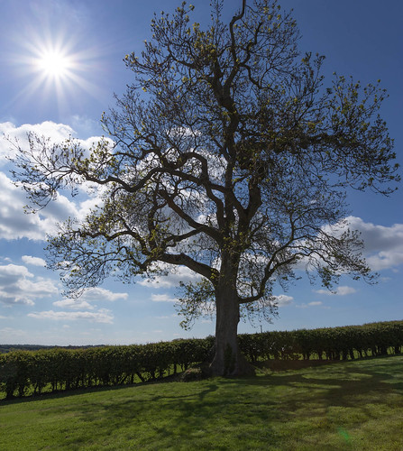 baum ireland irland landscape landschaft newgrange pflanzen tree