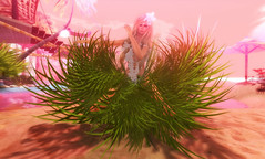 Island Bride 2 by dy secondlife