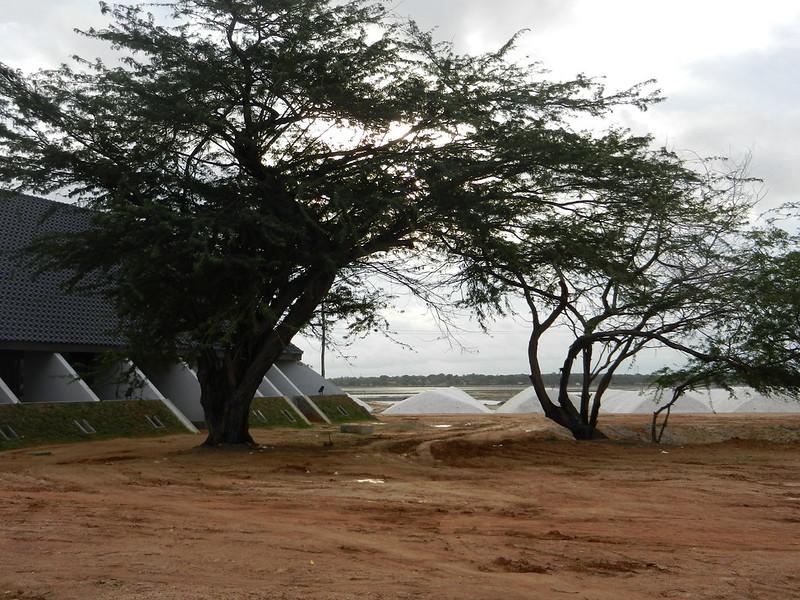 Так на Шри Ланке добывают соль