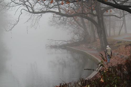 morning trees winter fall water misty fog landscape foggy echolake unionco