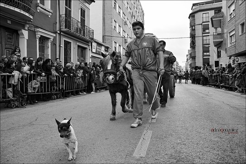 El gos ratoner by ADRIANGV2009