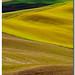 Colore nel senese by Sergio Battaglia