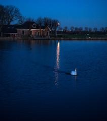 2014 02 03 Amstel Golden Hour